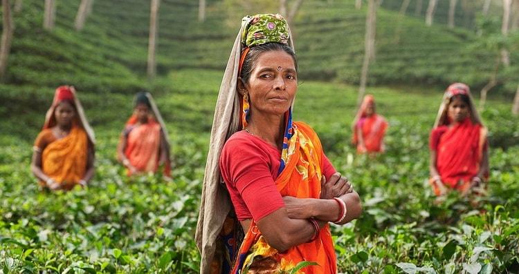 История возникновения чая