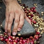 История Ямайского кофе