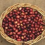 Сорта кофе. Блю Маунтин - Jamaica Blue Mountain Coffee