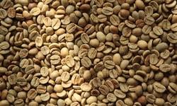 Сорт кофе. Типика - (Typica, то есть «Типичный»)