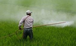 Содержит ли кофе пестициды и химические вещества?