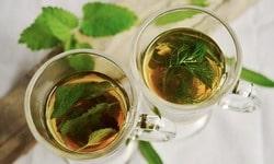 Белый чай польза для здоровья. Преимущества и полезные свойства