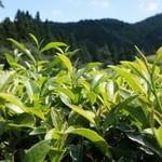 Зелёный чай: польза и вред