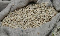 Преимущества зелёного кофе в зернах