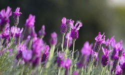 Лучшие травяные чаи для лечения беспокойства