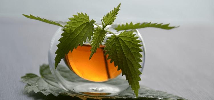 Чай из листьев крапивы