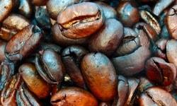 Сорт кофе Марагоджип