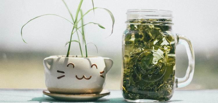 Крымский чай. Полезные свойства травянных сборов